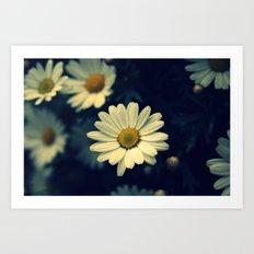 Fresh Daysies flowers 0944 Art Print
