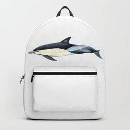 Common dolphin (Delphinus delphis) Backpack
