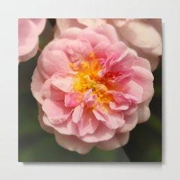 Rose heart / Coeur de rose. Metal Print