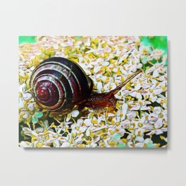 Mellow Mollusk | Painting Metal Print