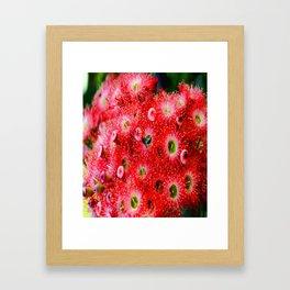 Flowering Gum Framed Art Print