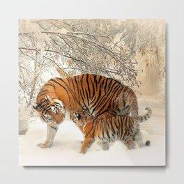 Tiger_2015_0126 Metal Print