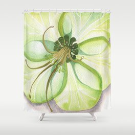 Hellebore Bloom Shower Curtain