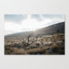 Sureal Canvas Print