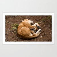 Sleeping all day, every day. Art Print