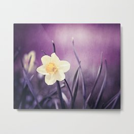 Purple Yellow Daffodil Flower Photography, Violet Nature Floral Metal Print