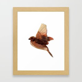 Sparrow Framed Art Print