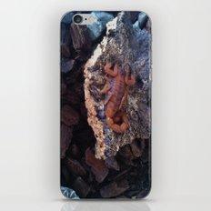 Scorpion iPhone & iPod Skin