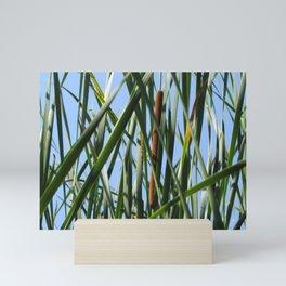 Cattails Mini Art Print