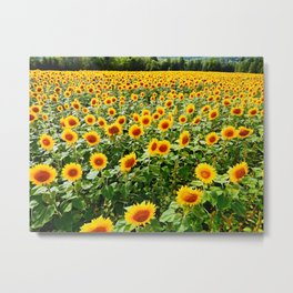 Field of Sunny Flowers Metal Print