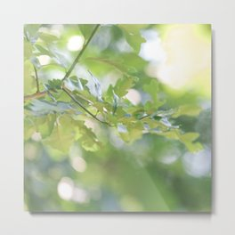 Oak in Summer - Nature Photography Metal Print