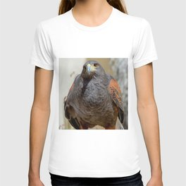 Harris Hawk T-shirt