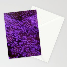 Purple Queen Anne's Lace Landscape Stationery Cards