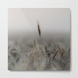 Tall Wheat in the Field Metal Print
