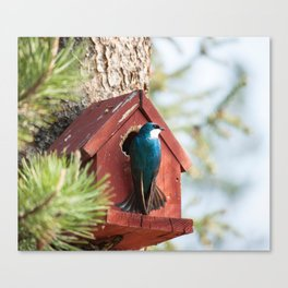 Blue Swallow Photography Print Canvas Print
