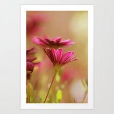 Pink Blush Art Print