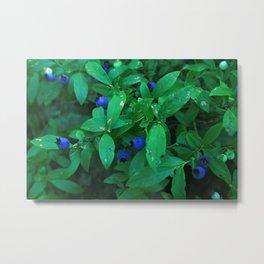 Blueberries and Leaves Metal Print