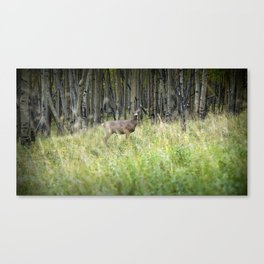 Knock in the Woods and the Woods Knock Back Canvas Print