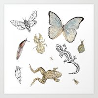 insects Art Prints featuring Insects by Claire Bond