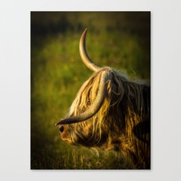 Scruffy Cow Canvas Print