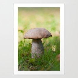 Boletus on grass. Autumn shot in forest. Shallow depth of field. Art Print