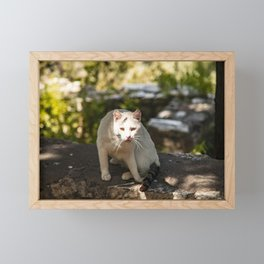Cat in the Park Framed Mini Art Print