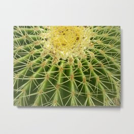 cactus macro II Metal Print