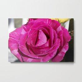 Valentine's Day Roses 21 Metal Print