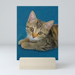 Hello Cutie  -  Baby cat Mini Art Print