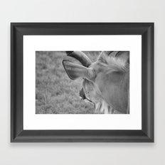 Zoo series no.1 Framed Art Print
