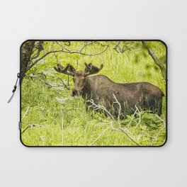 Bull Moose in Kincaid Park, No. 2 Laptop Sleeve