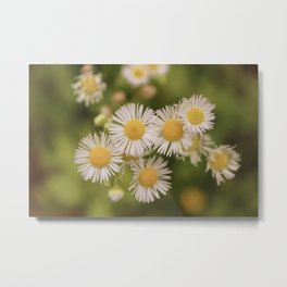 Little Vintage Daises Metal Print
