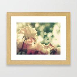Sun-Kissed Pink Roses Framed Art Print