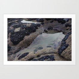 Rock Pool Amongst Mussel Beds Art Print