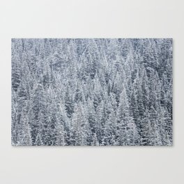 The Snow Frost Trees (Color) Canvas Print