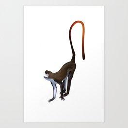 Schmidt's Red Tailed Monkey Art Print