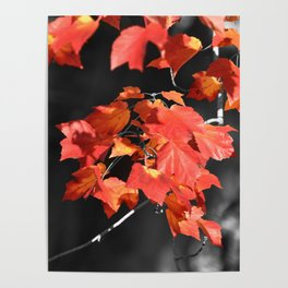 Cold Fall Poster