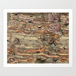 Peeling Worm Wood Art Print