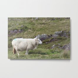 No need to be sheepish about it Metal Print