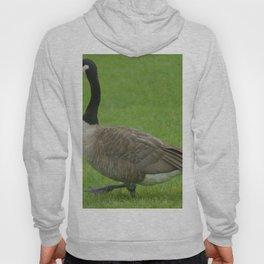 Duck Duck Goose Hoody