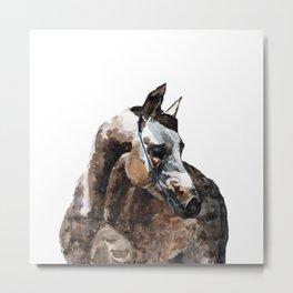 Grey arabian horse portrait Metal Print
