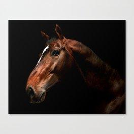 stallion portrait Canvas Print