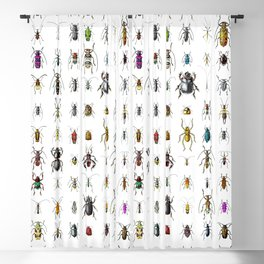 Beetlemania / Get your entomology on! Blackout Curtain