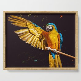 Macaw Parrot Serving Tray