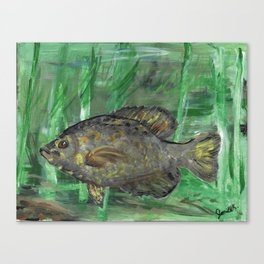 Black Crappie Fish in River Water Canvas Print