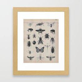 Vintage Insect Study on antique 1800's Ledger paper print Framed Art Print
