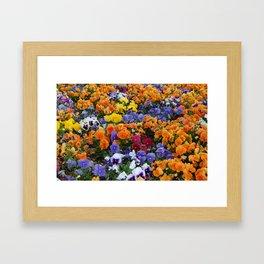 Pancy Flower 2 Framed Art Print