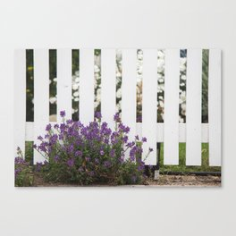 White Picket Fence Canvas Print
