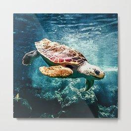 Tropical Sea Turtle Diving in the Blue Caribbean Metal Print