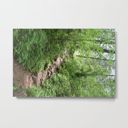 The Winding Trail Metal Print
